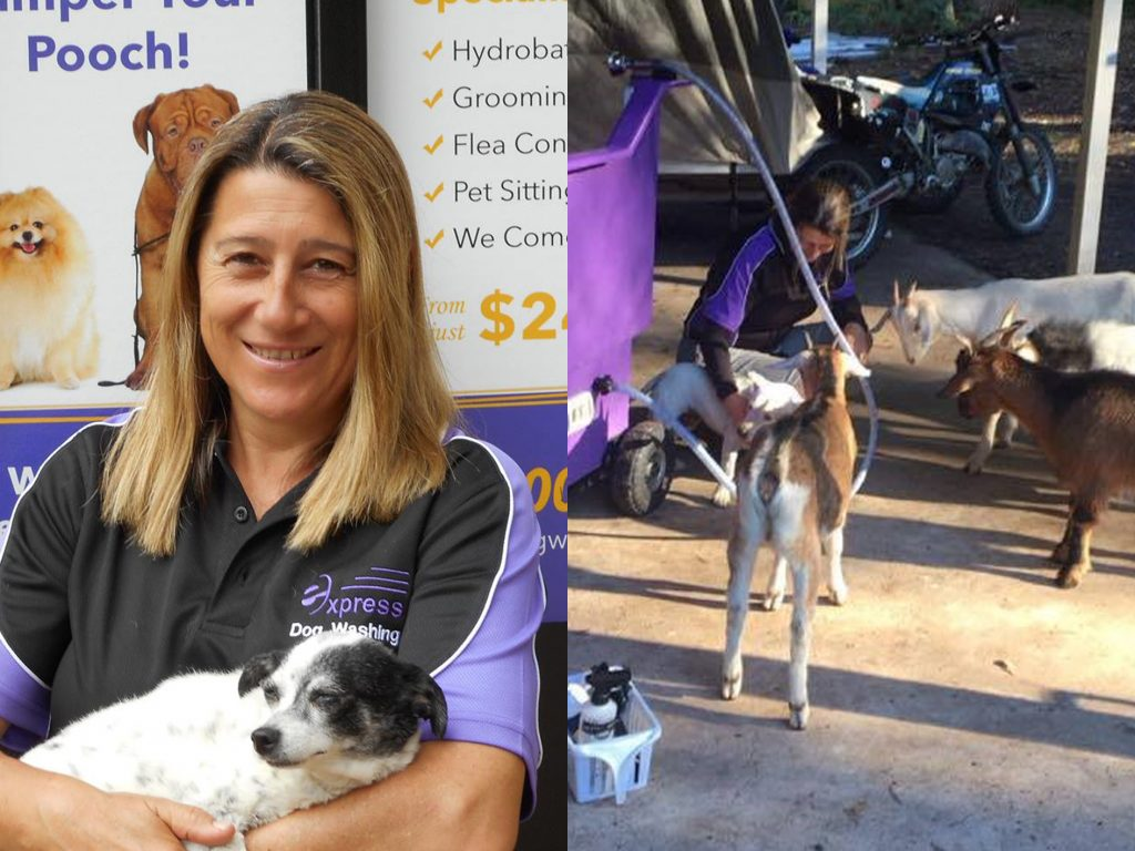 A Day In The Life Of An Express Dog Groomer   Express